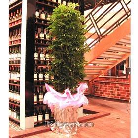홍콩야쟈 *높이170cm이상*(축하용으로 아주 제격입니다,잎이 풍성이 붙어있는만큼 재물운도 붙는다는 설도있죠..^^)