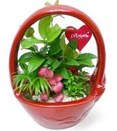 귀요미모듬식물(테이블용)