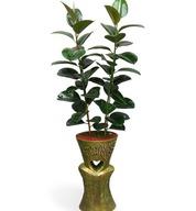 고무나무마블585(키1M50가량)