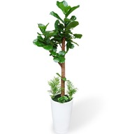 떡갈나무234(키1미터50가량)