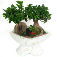 팬더고무나무RB(웰빙디자인식물)
