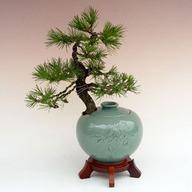 해송청자긴단지REJ(운치있는식물)